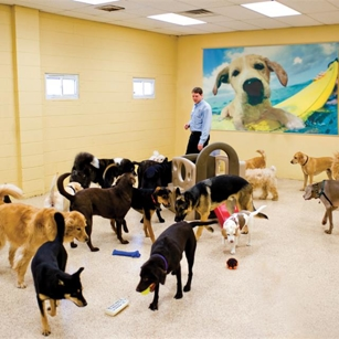 Staff Interacting with Room of Dogs