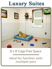 Luxury Suites: 8' x 8' Cage Free Space. Ideal for families with multiple pets.